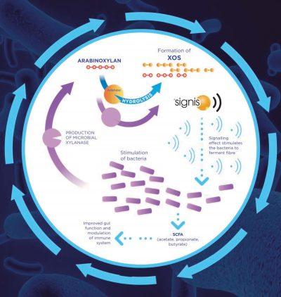 674-AB-Vista-Signis-stimbiotic-IPPE-2020