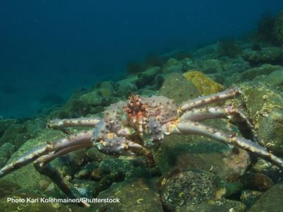204-Carrier-Transicold-king-crab