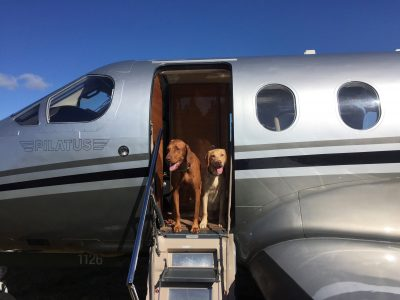 021-Jet-Exchange-pet-transport-Farnborough-Airport
